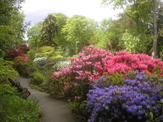 File rhododendrons at johnston gardens for A t the salon johnstone