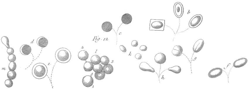 File Rozier   Cours d E2 80 99agriculture  tome 3  pl  3  fig12 additionally Index in addition Fichier Rozier   Cours d E2 80 99agriculture  tome 5  pl  15  fig12 besides Img 20pres together with Australopithecus And Homo Habilis. on fig12