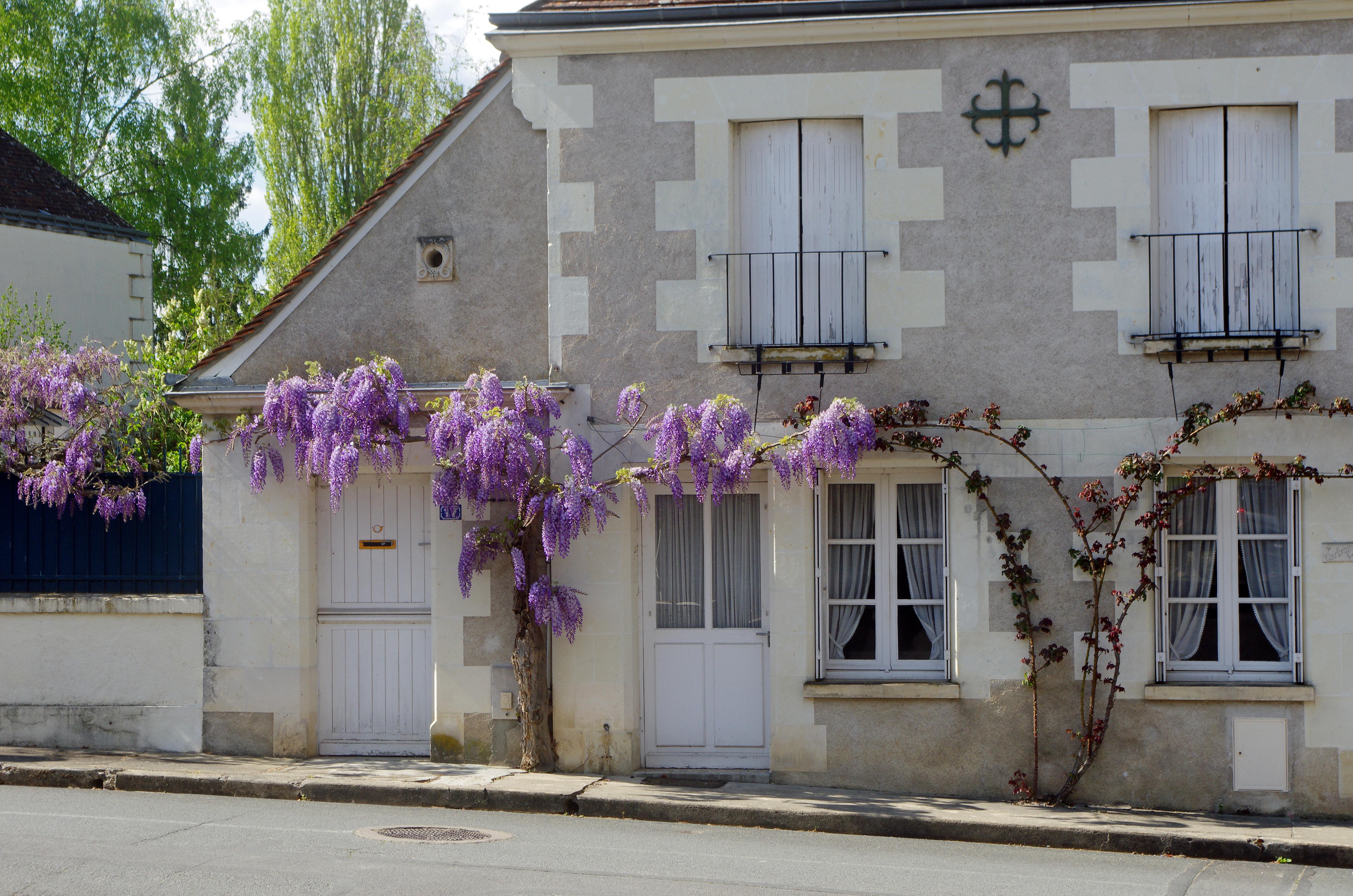 By Daniel Jolivet (Saint-Jean-Saint-Germain (Indre-et-Loire)) [CC BY 2.0 (https://creativecommons.org/licenses/by/2.0)], via Wikimedia Commons