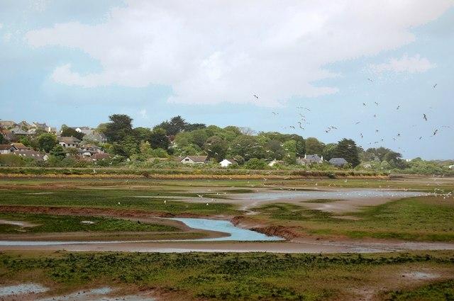 Seagulls at Lelant Saltings - geograph.org.uk - 394488