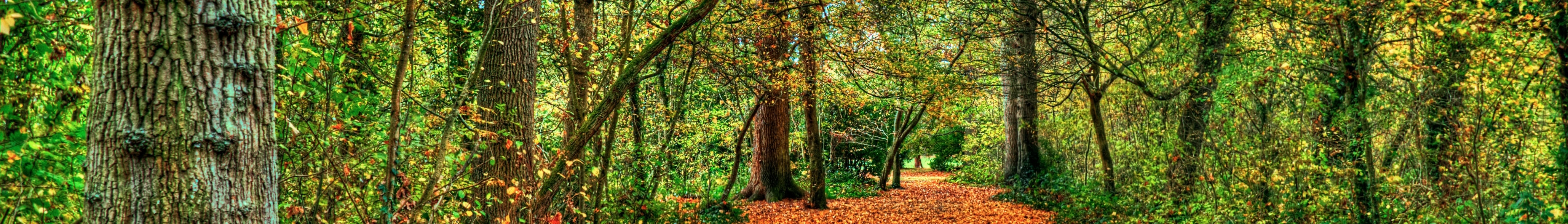file south east england banner sussex forest jpg wikimedia commons