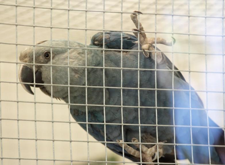 animales en peligro de extincion y extintos!