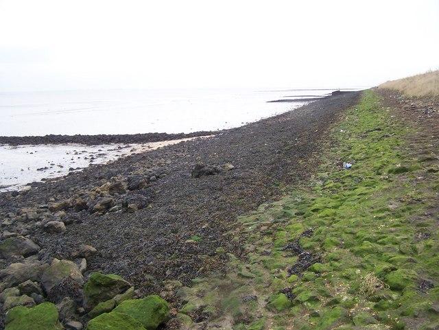 Stone Groynes on Sea Wall - geograph.org.uk - 1116679