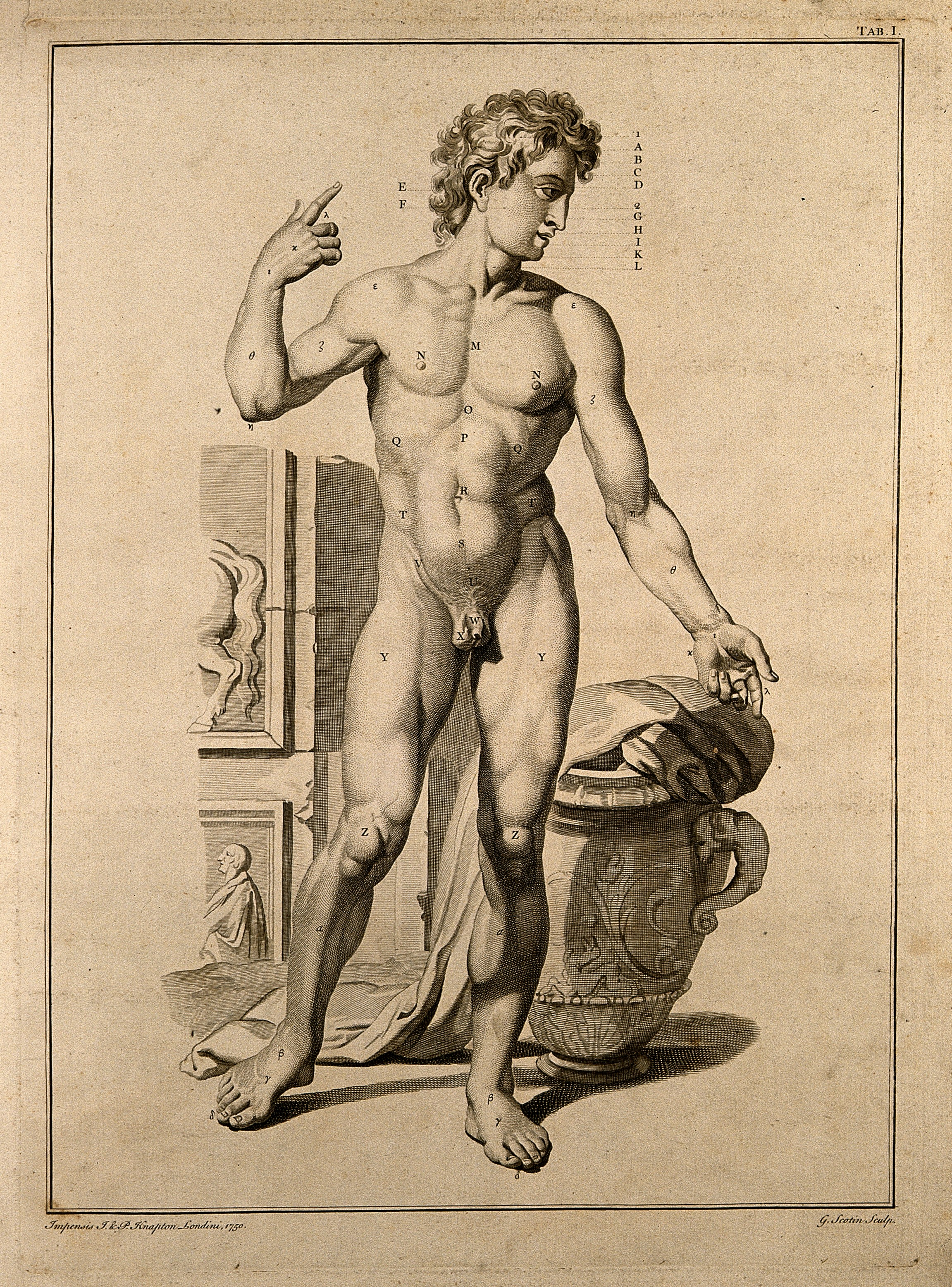 Filesuperficial Anatomy Of The Man Engraving By G Scotin Wellcome