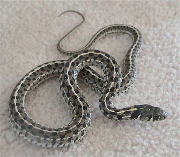 How To Identify And Control Snakes In The Garden