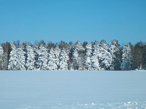 File:Vinter Håbo.png