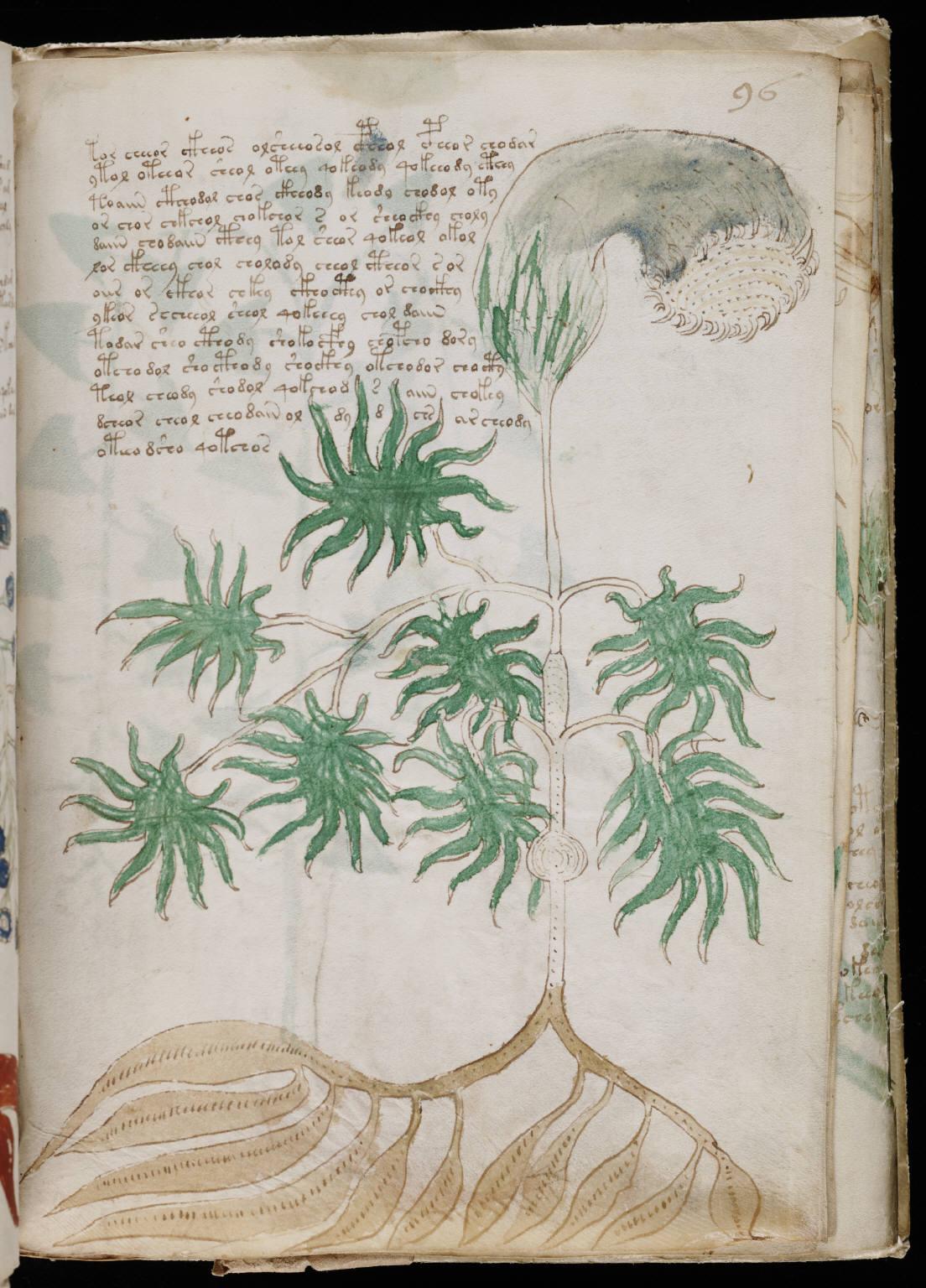 https://upload.wikimedia.org/wikipedia/commons/4/42/Voynich_Manuscript_(173).jpg