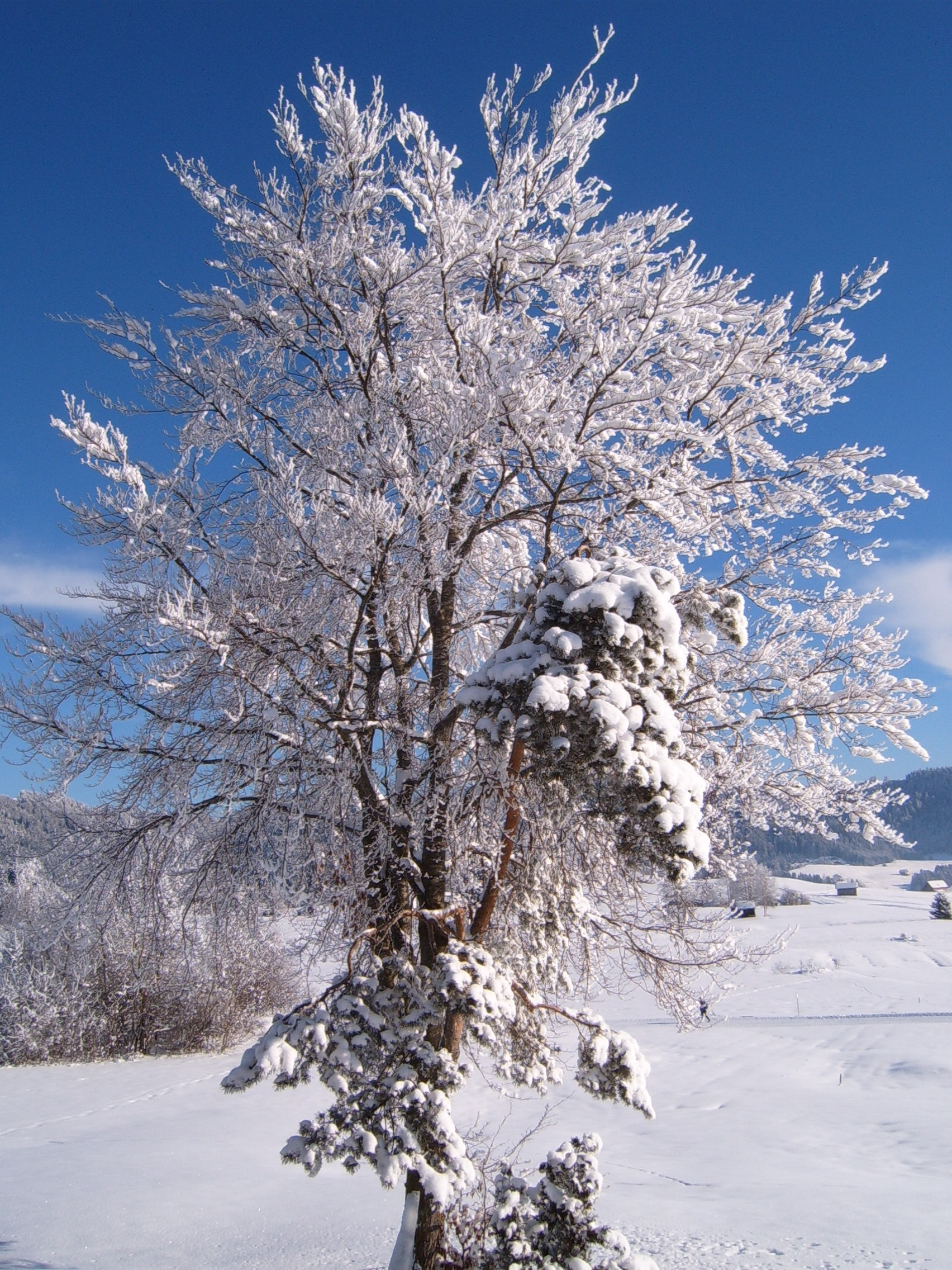 File:Winter Tree.jpg