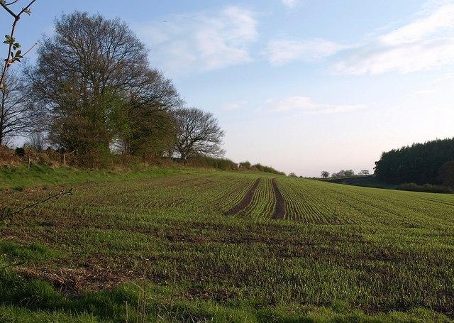 Young crop, Brackenthwaite Lane - geograph.org.uk - 1257799