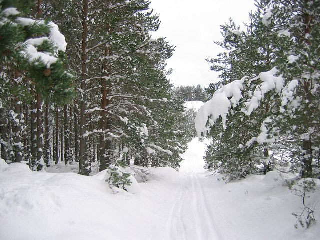 Abernethy Forest - geograph.org.uk - 134032