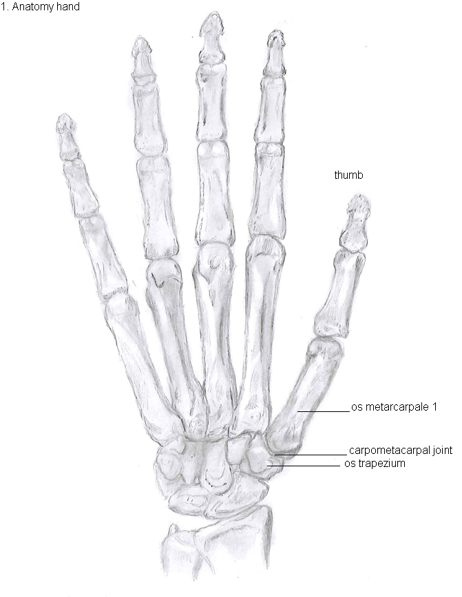 Fileanatomy Of The Handg Wikimedia Commons