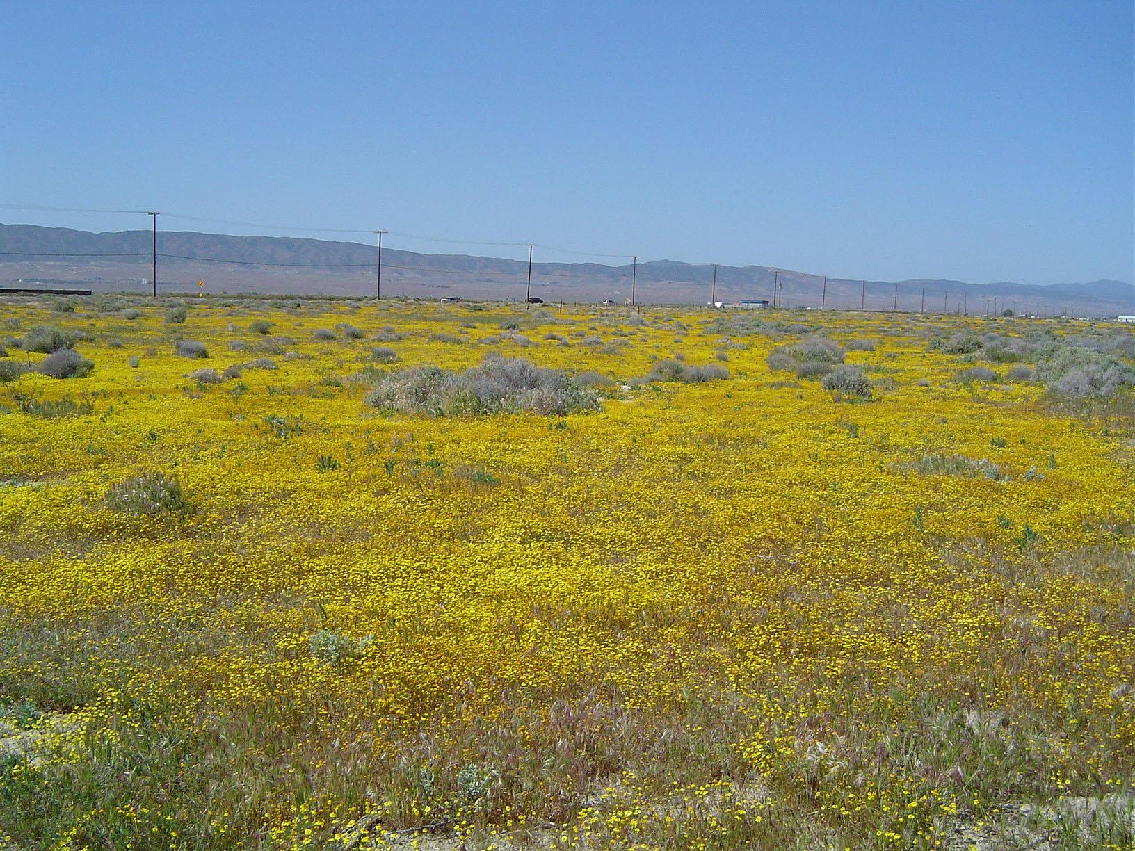 Christian singles groups antelope valley