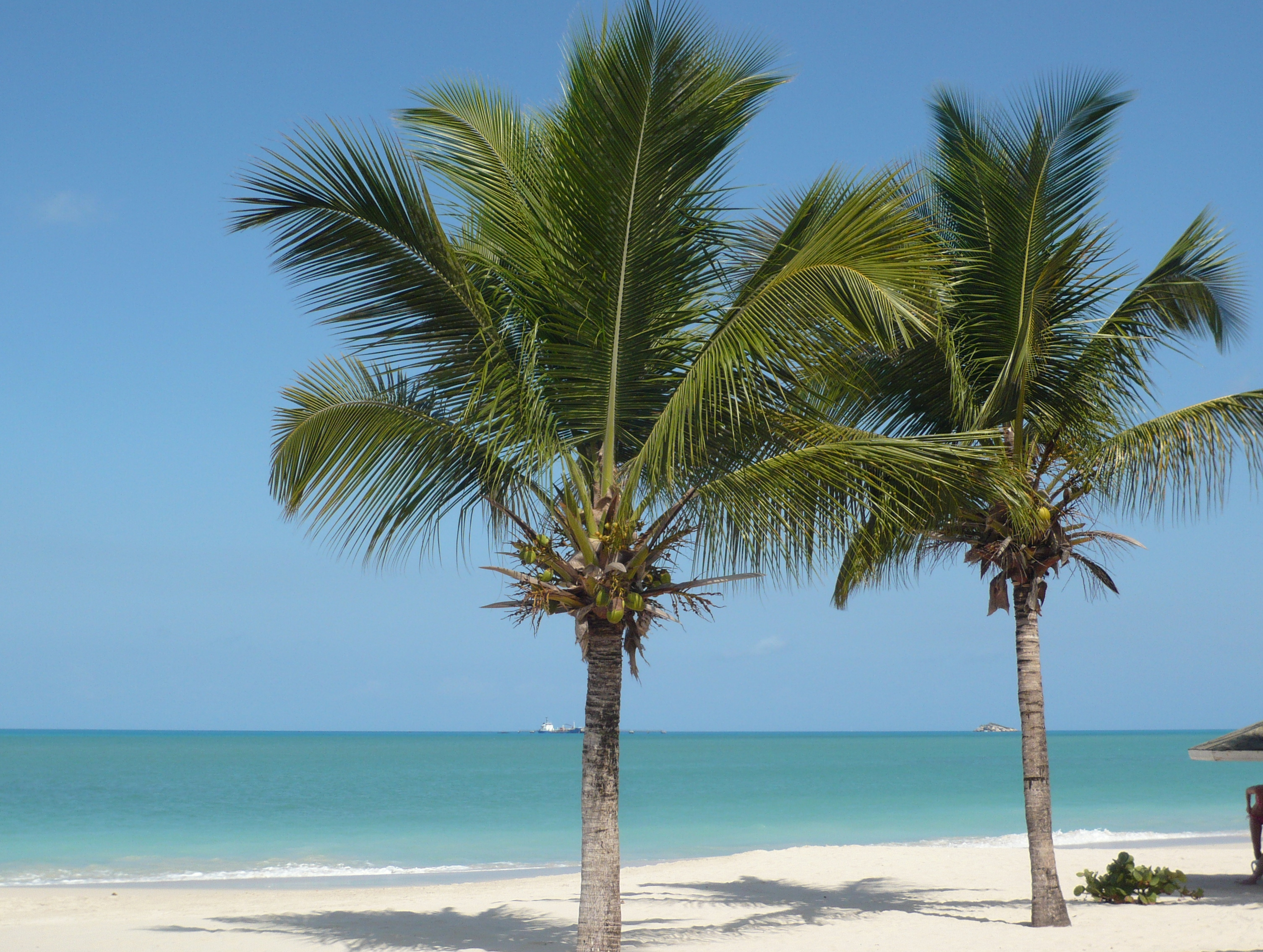 dating in antigua and barbuda