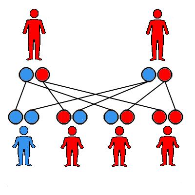 relationship between genotype and phenotype thalassemia intermedia