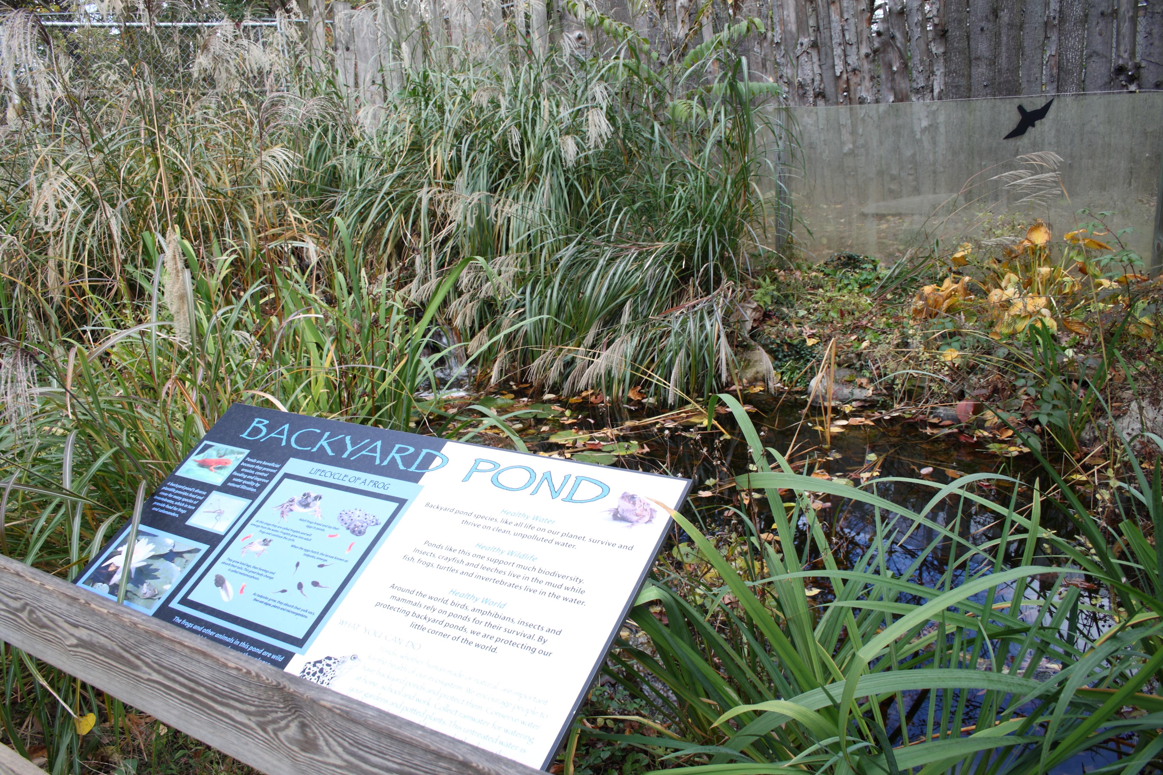 file backyard pond exhibit beardsley zoo 2009 11 06 jpg