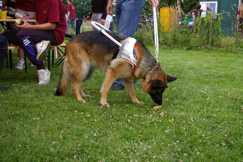 Image Result For Training Dogs Not