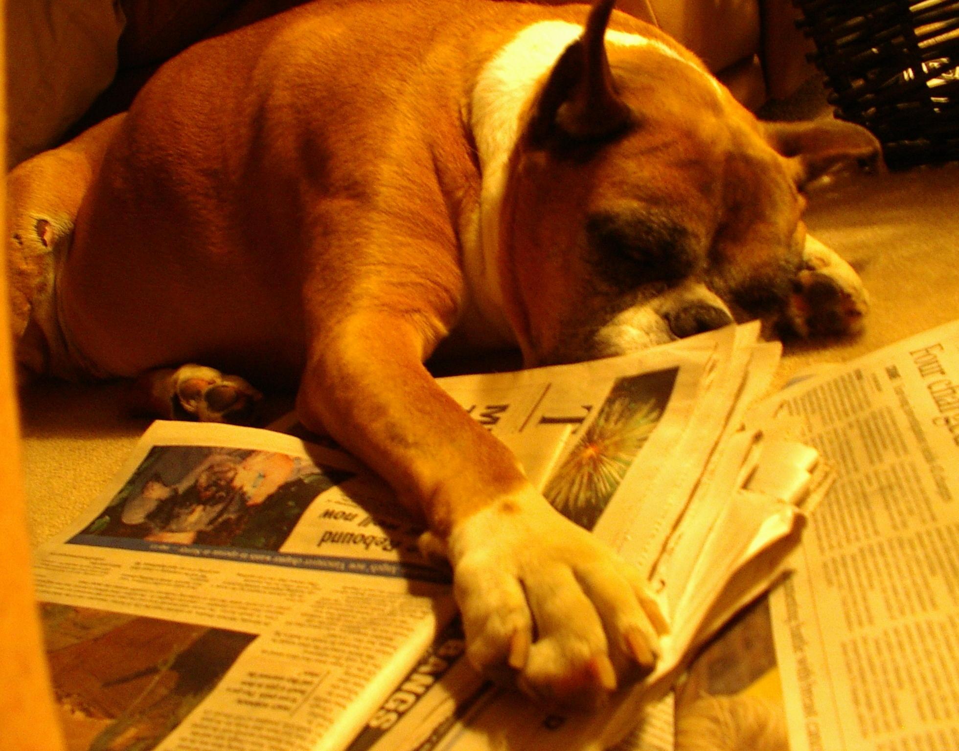 Old Dog Sleeping Pattern Changed