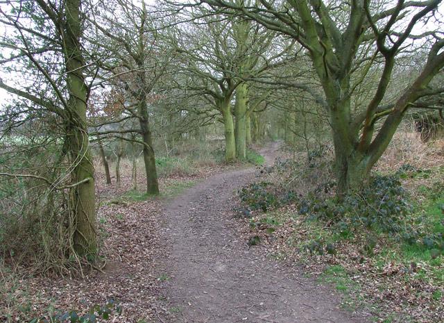 Bridleway near Highgate Common, Staffordshire - geograph.org.uk - 365927