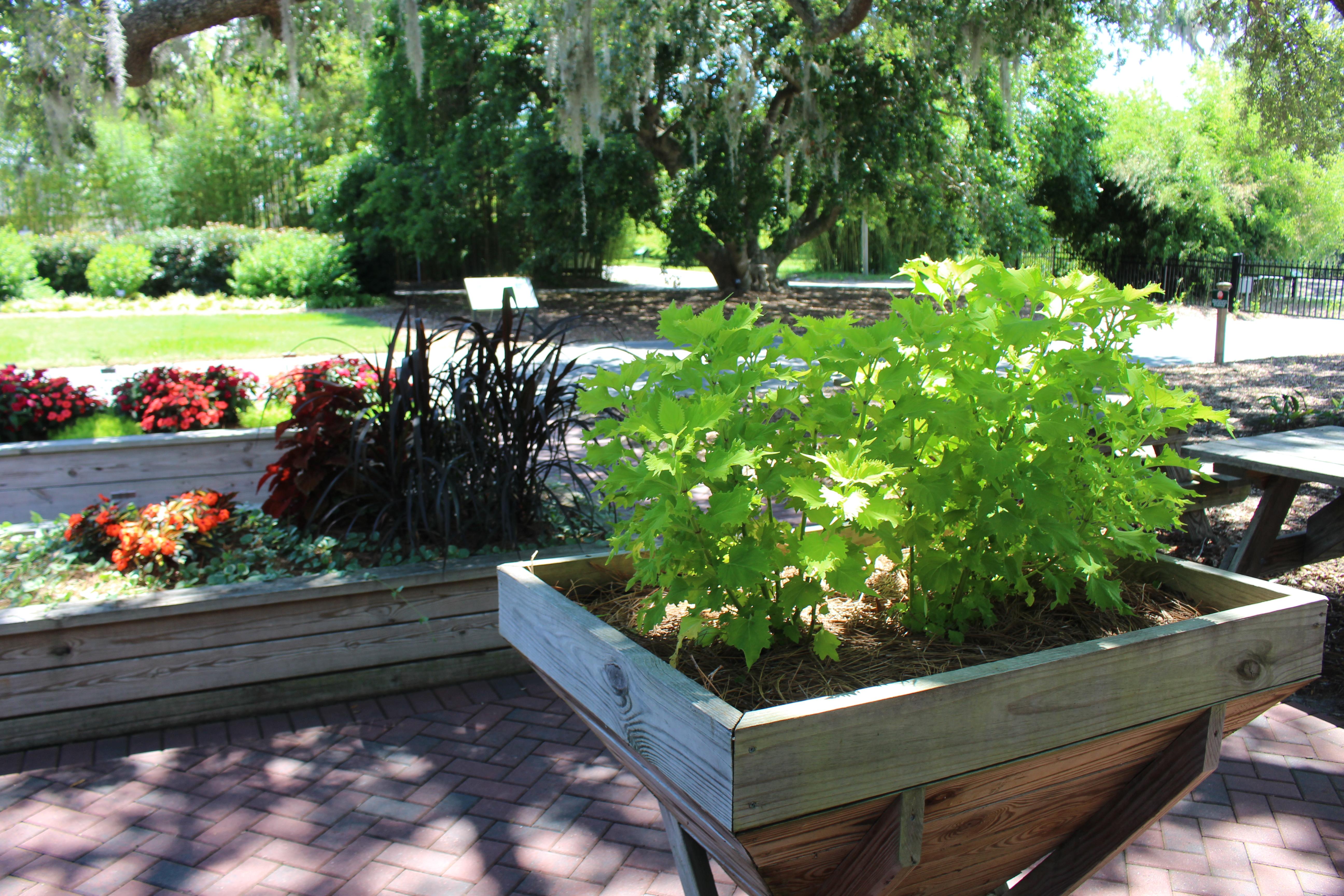 File:Coastal Georgia Botanical Gardens, Garden For All Abilities Raised  Planters 4