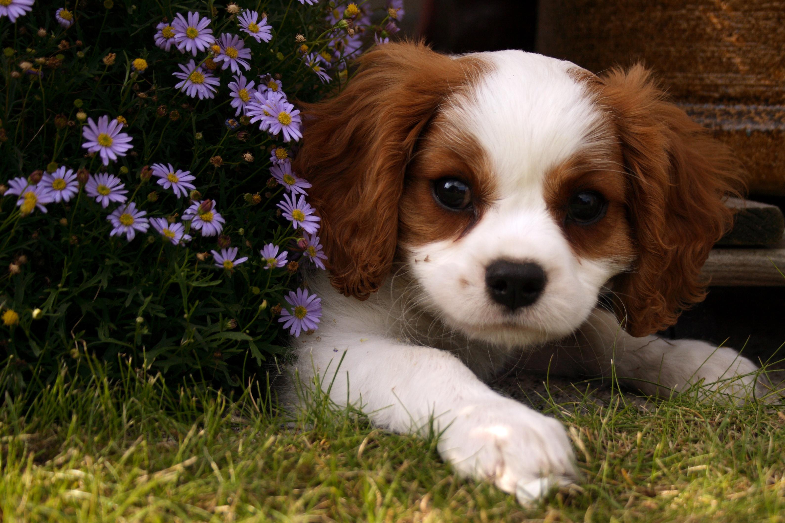 file cute dog jpg wikimedia commons