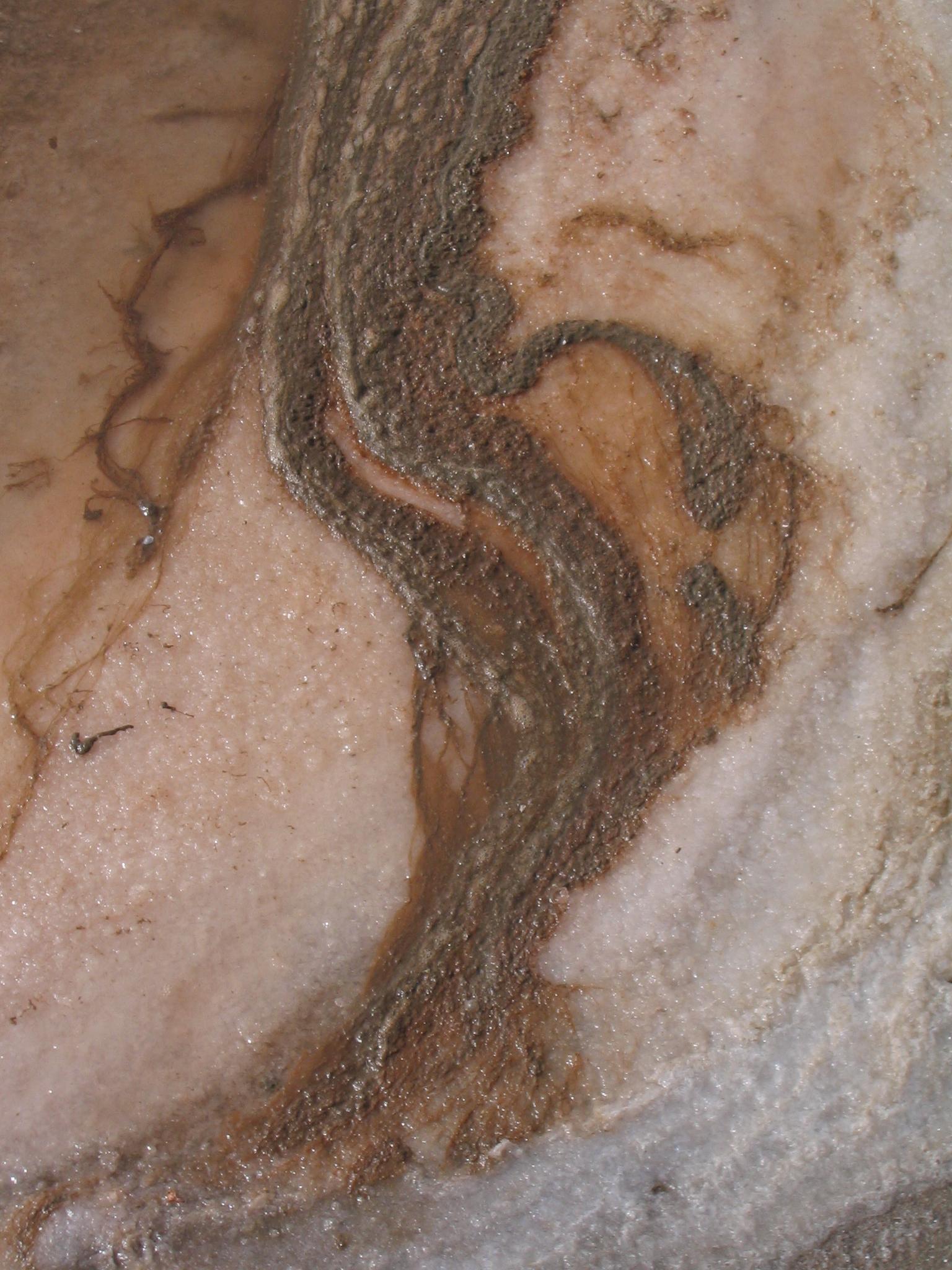 Alga dunaliella salina propiedades