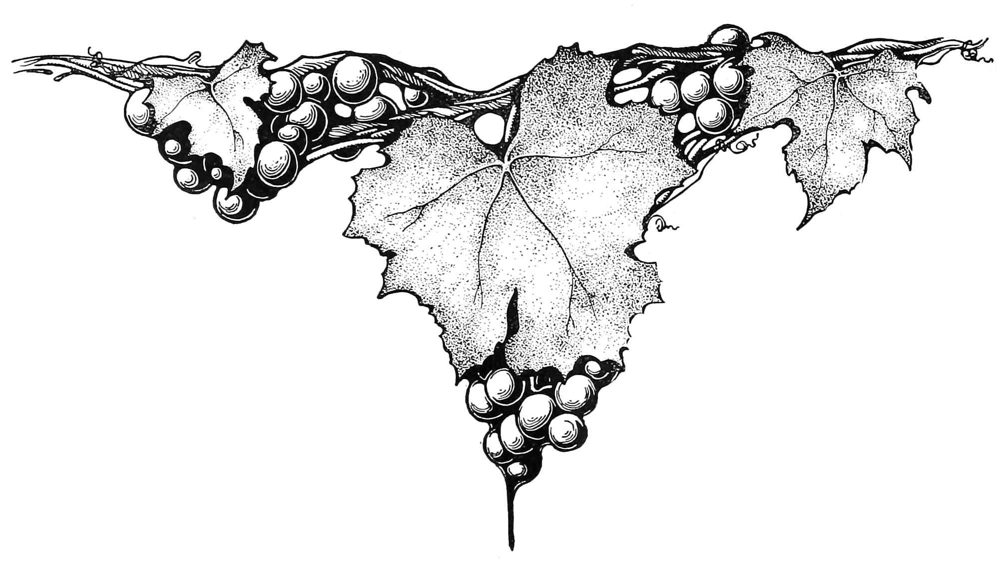 grapevine.de