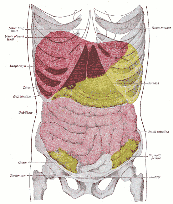 Traumatismo abdominal - Wikiwand