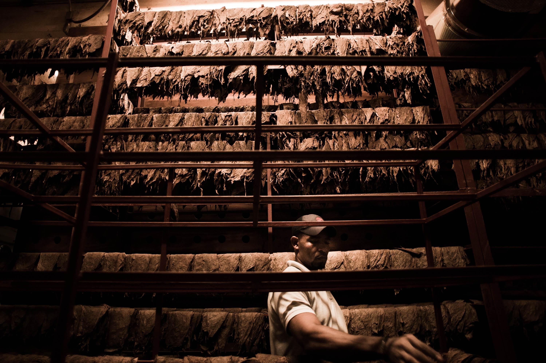 file handmade cigar production manufacture worker tabacalera de garcia factory casa de campo. Black Bedroom Furniture Sets. Home Design Ideas