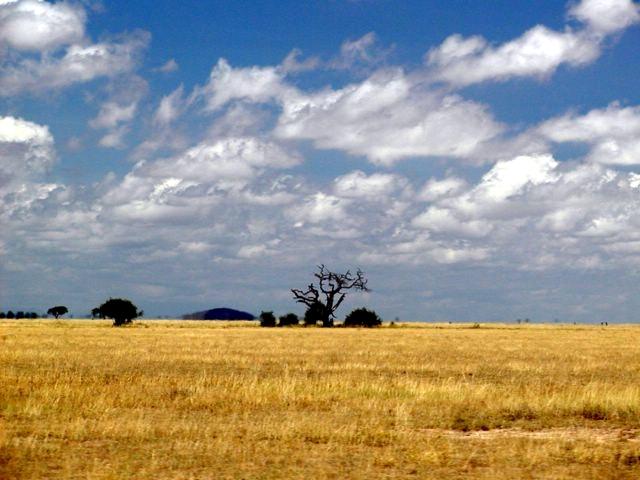 File:Kenya scrubland.jpg