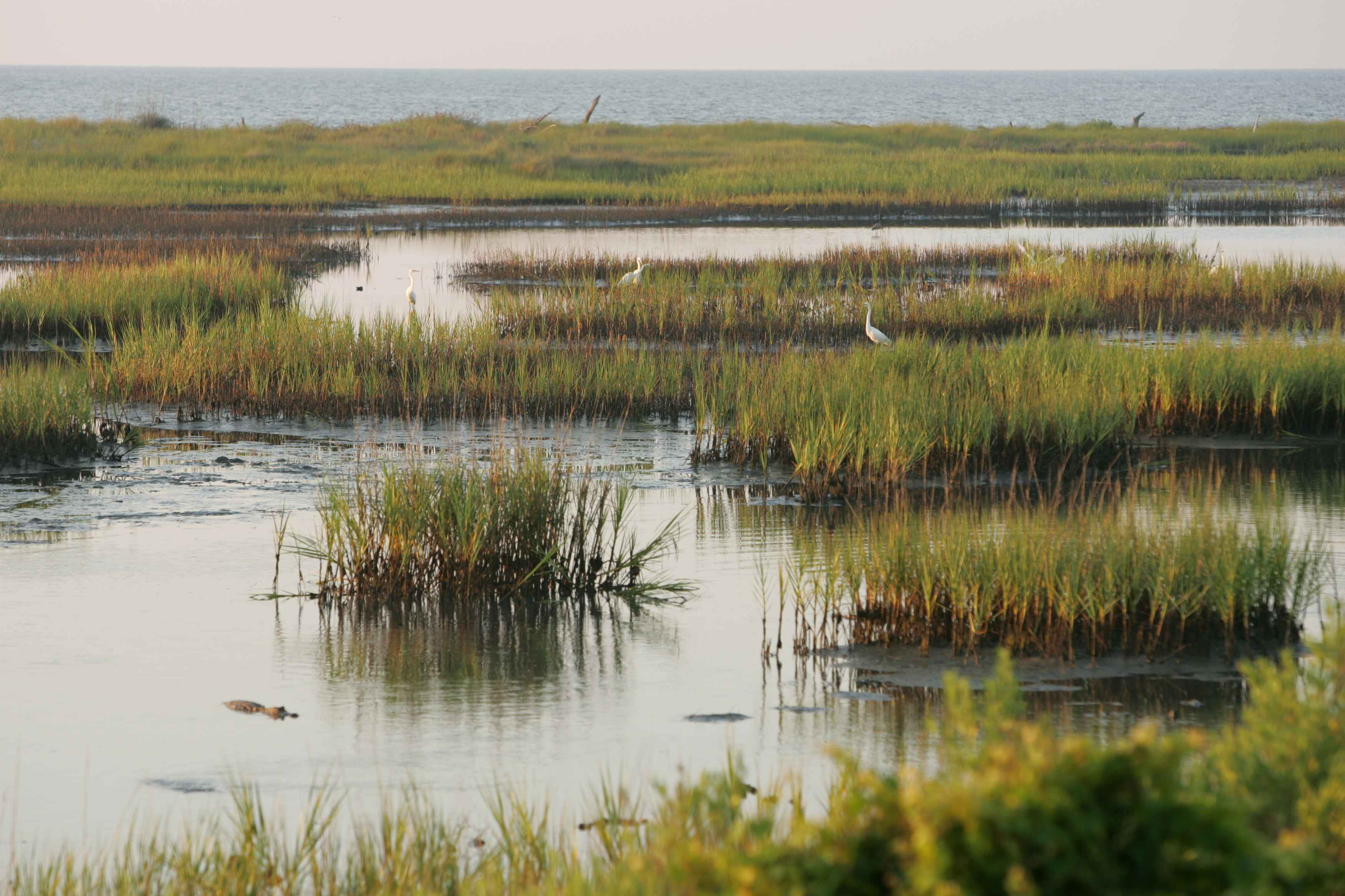 File marshland landscape wikimedia commons for Landscape images