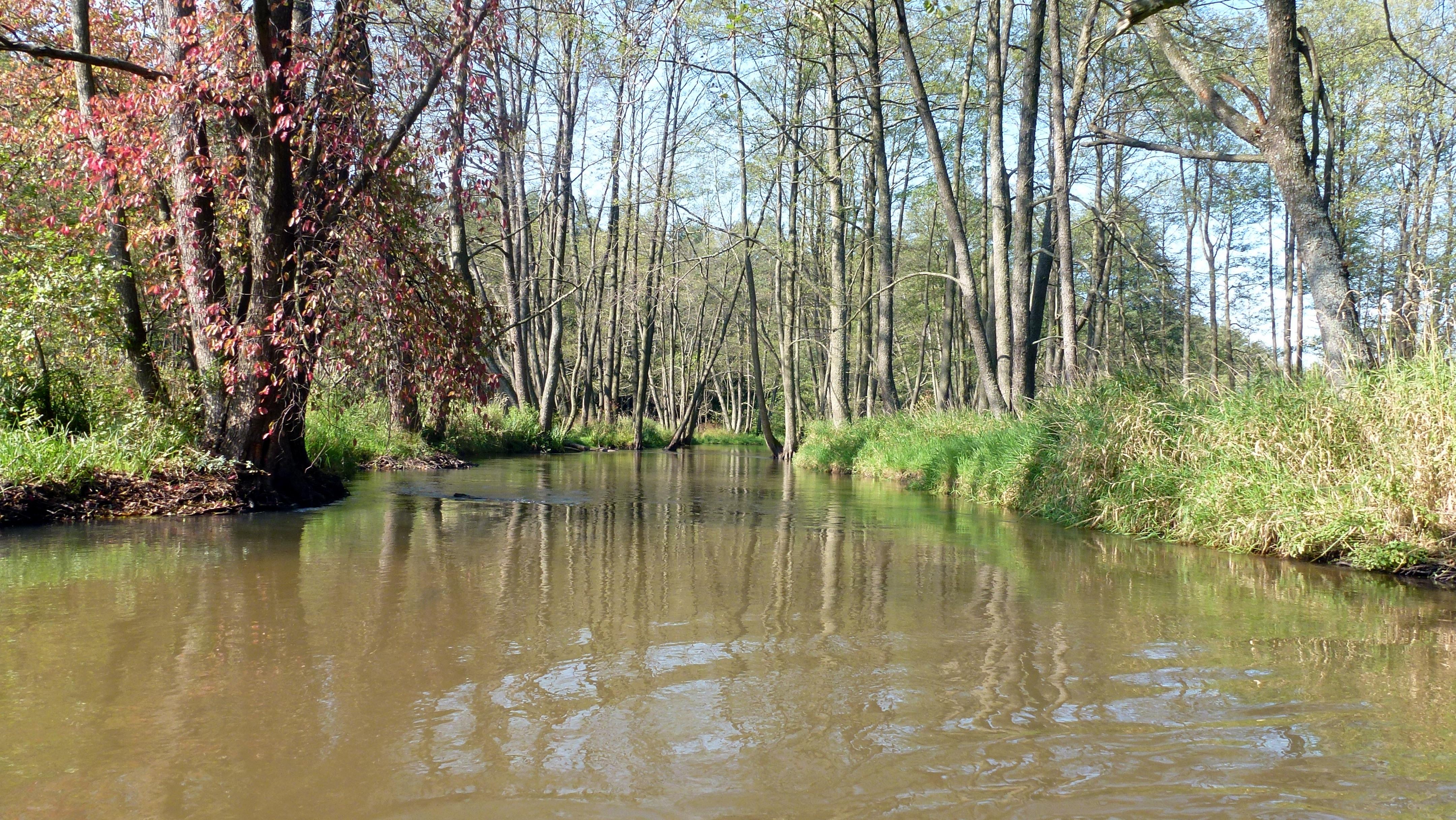 Rzeka Wieprz