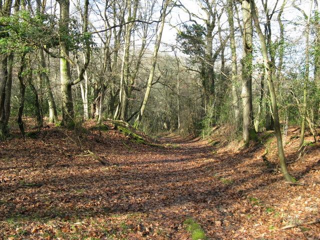 Path through Ebernoe Common - geograph.org.uk - 1162481