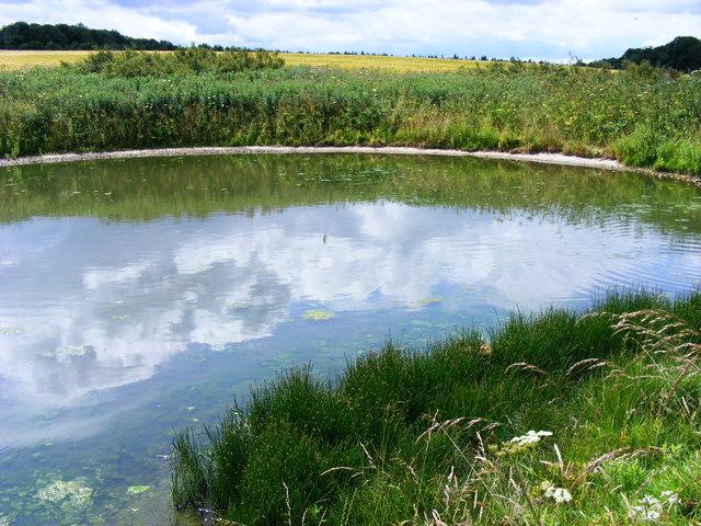 Pond, Sledmere House Estate - geograph.org.uk - 1393067
