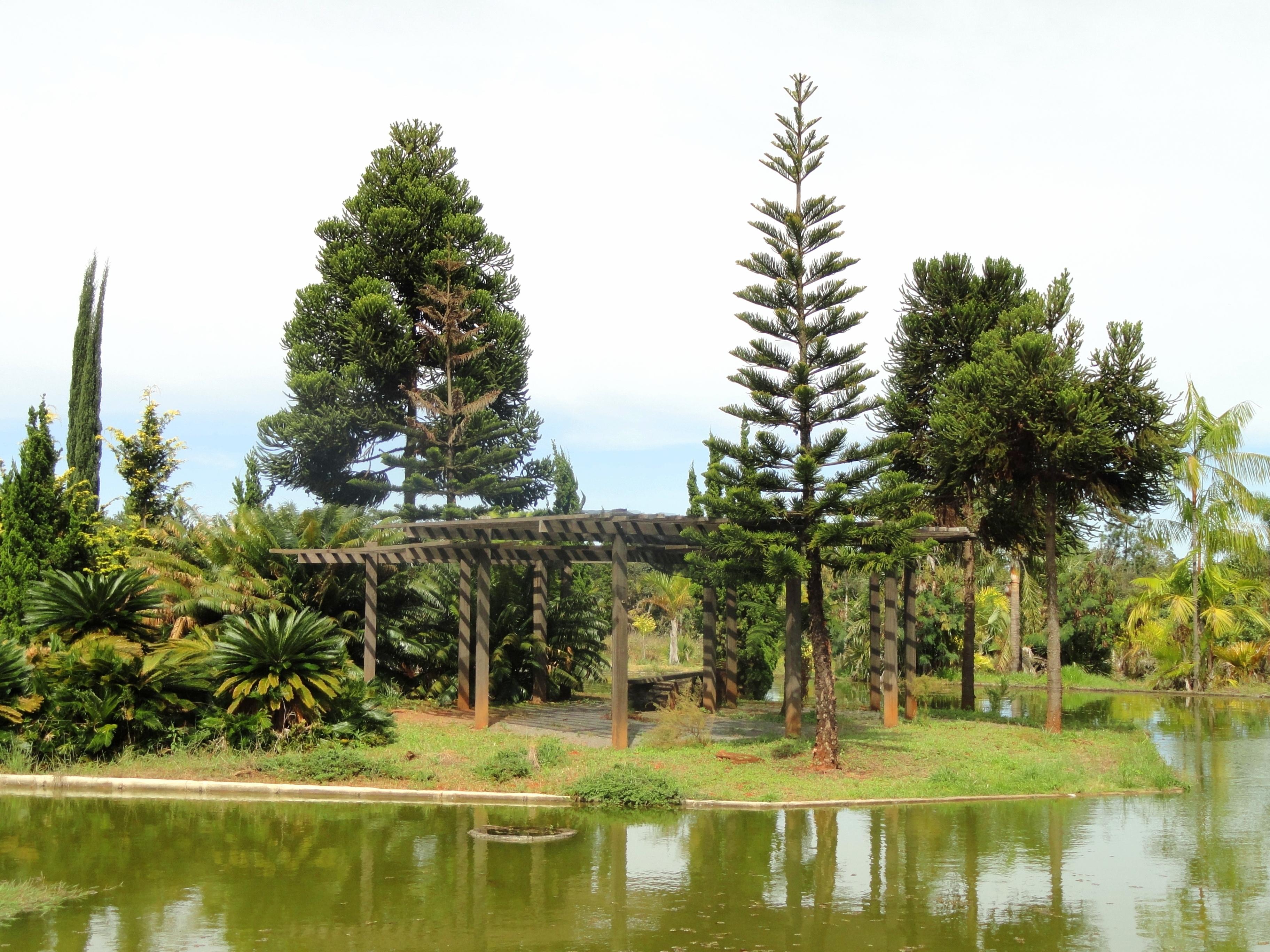 FilePond  Jardim Botânico de Brasília  DSC09729JPG  Wikimedia