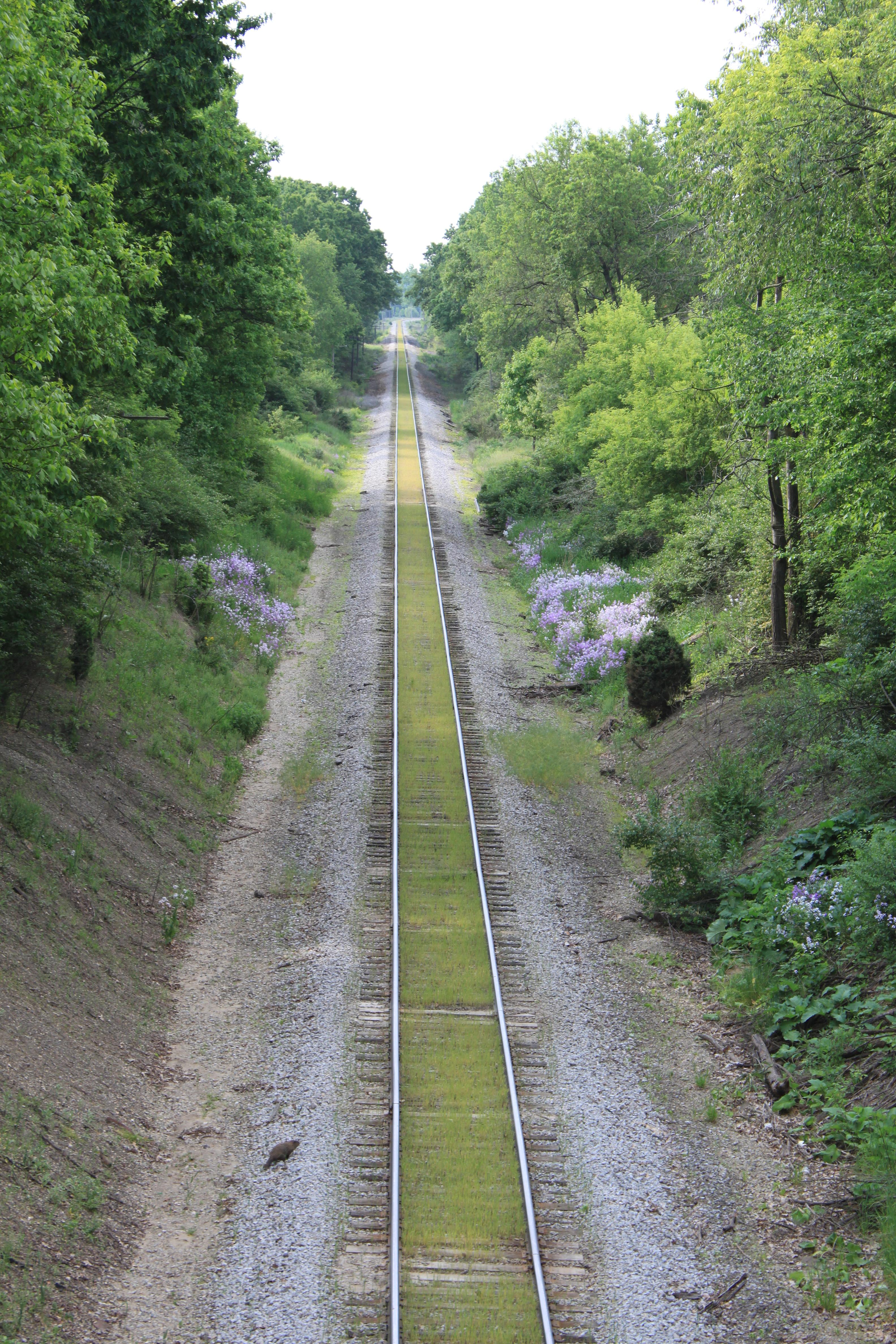 File:Railroad tracks from Bridge on Judd Road York Townshipyork township