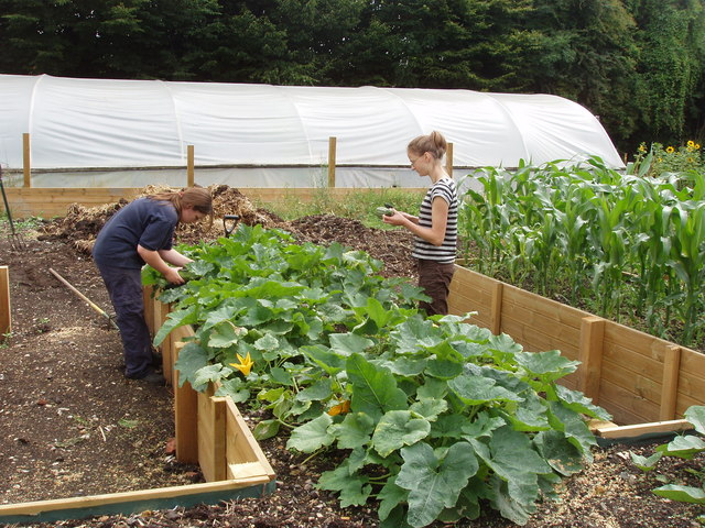 File:Raised vegetable beds for disabled access - geograph.org.uk - 1411061.jpg