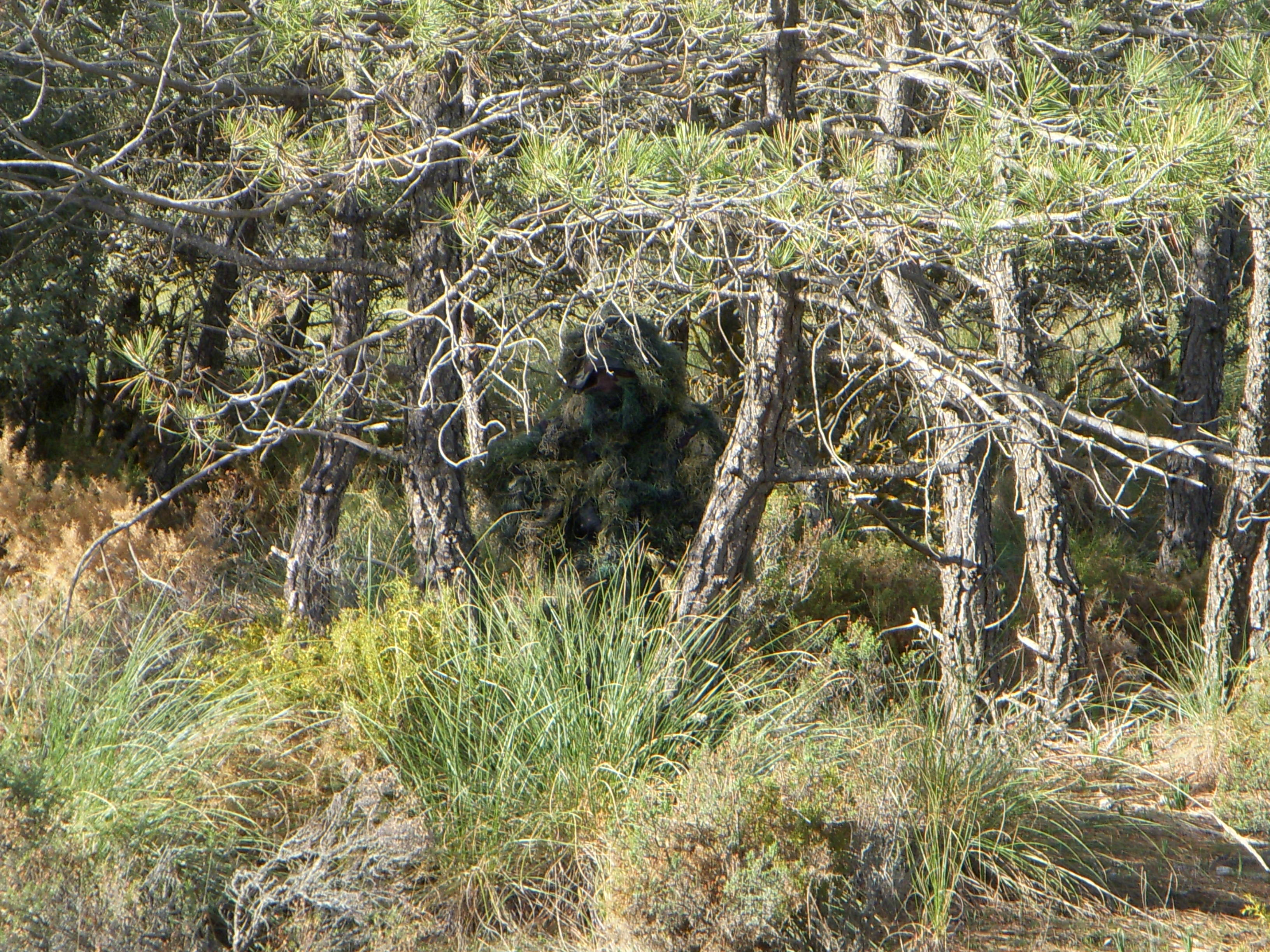 72 Ghillie Suit Wallpapers On Wallpaperplay: Wikimedia Commons