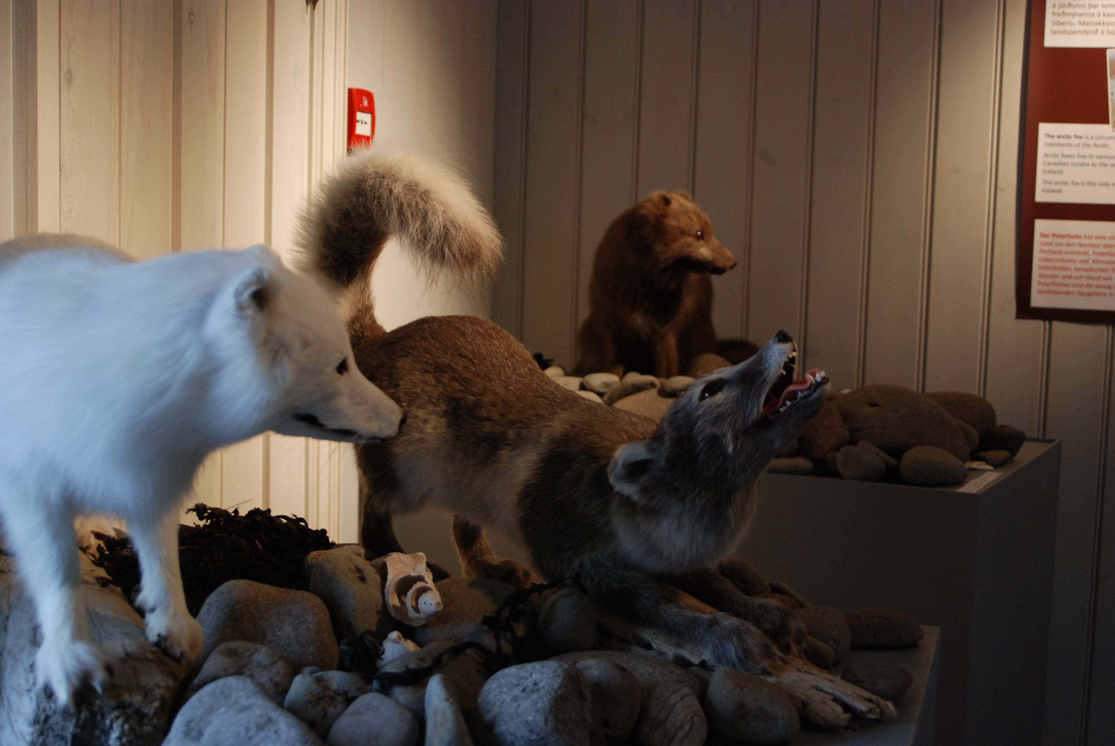 fox wiki Gammel Estrup museum