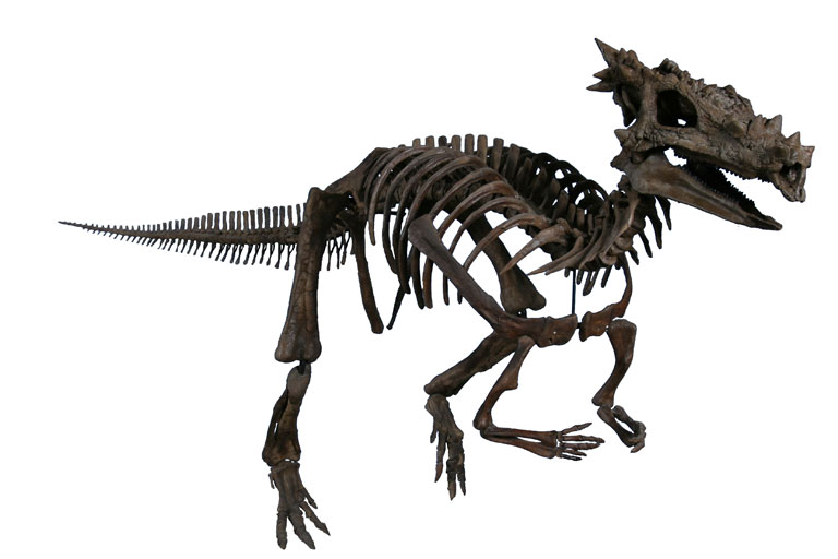 The Childrens Museum of Indianapolis - Dracorex skeletal reconstruction.jpg