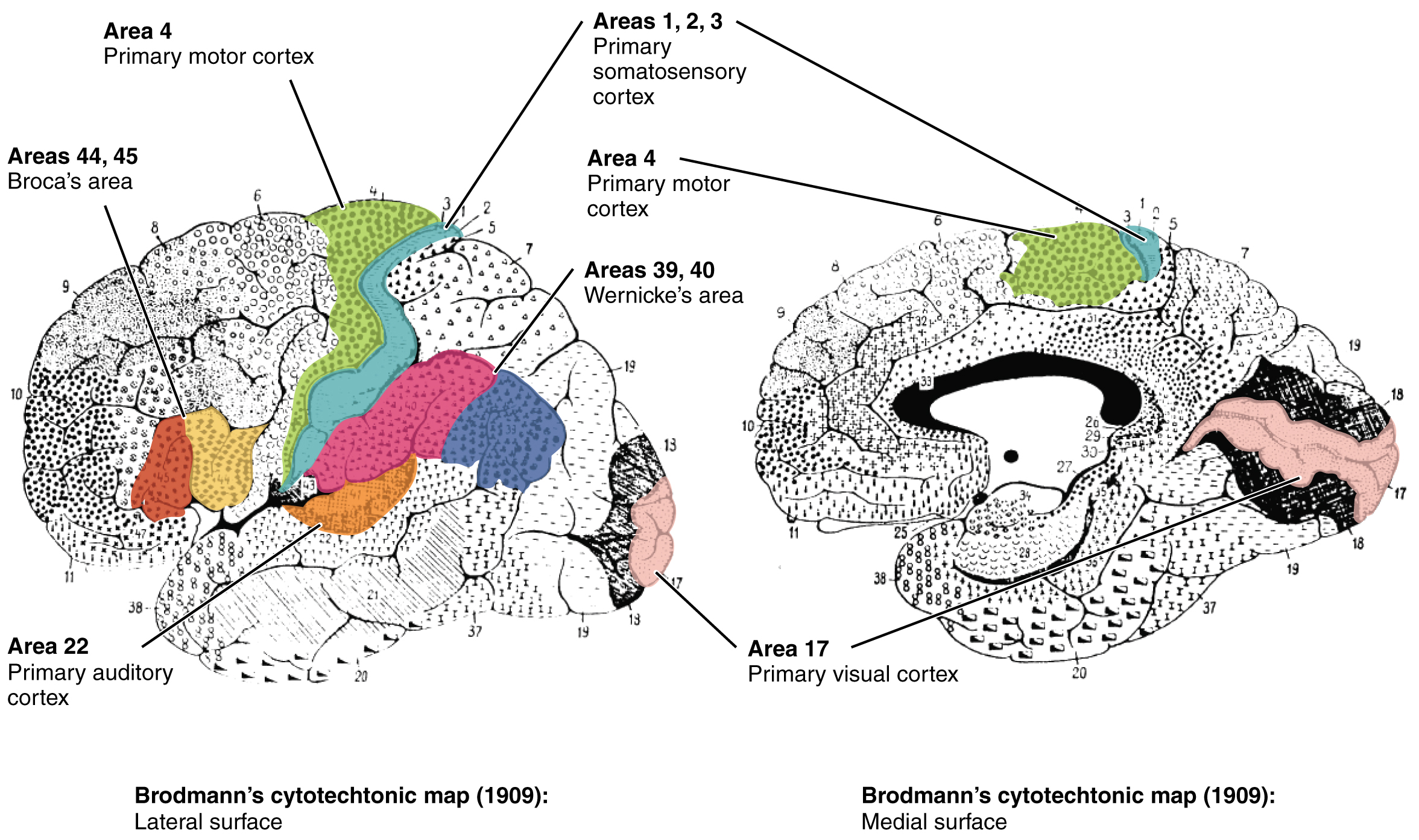 New Brain Map Accomplishes What Scientists Have Been Working On For
