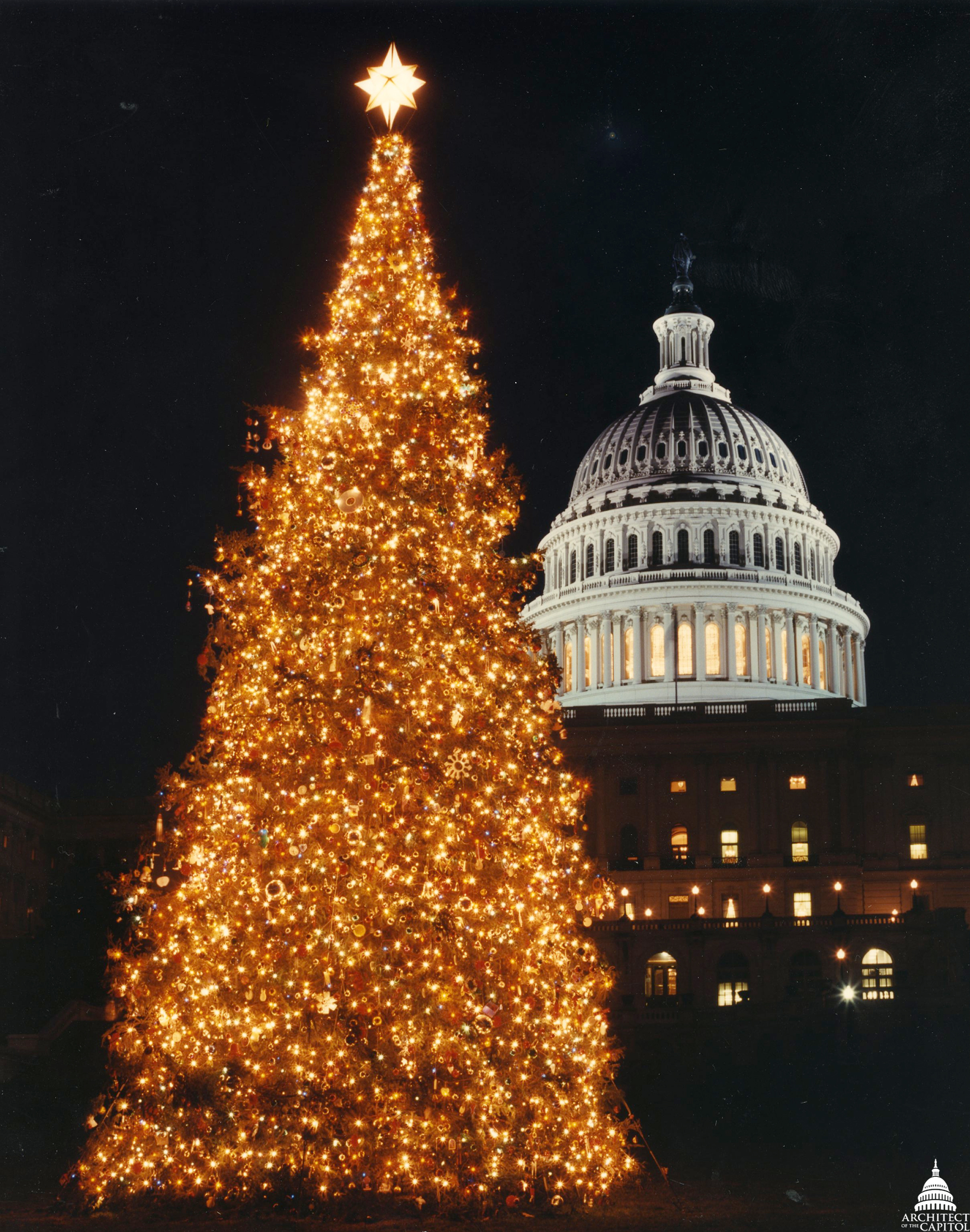Capitol Christmas Tree.File 1994 U S Capitol Christmas Tree 31805188505 Jpg