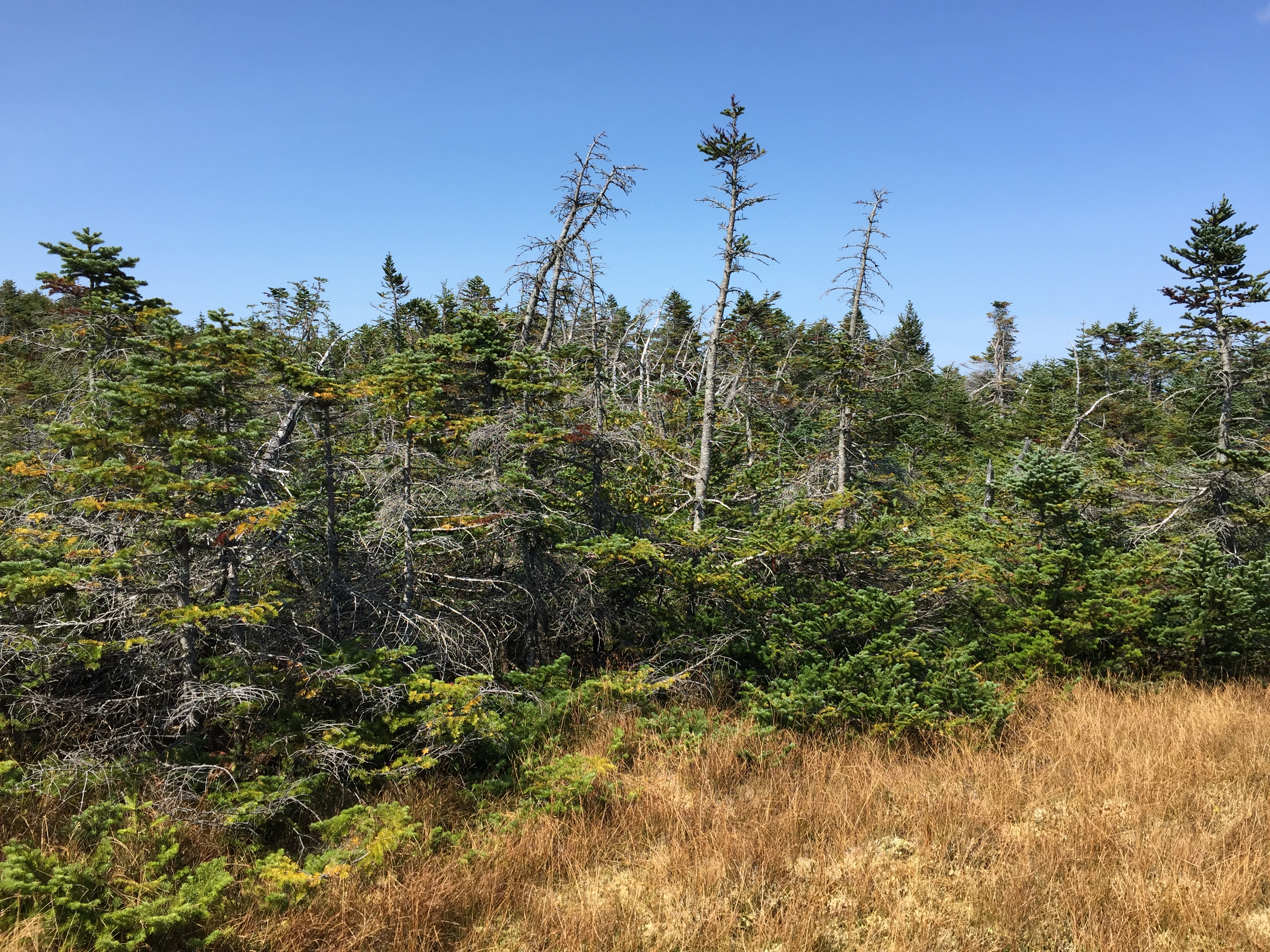 New york essex county keene - File 2016 09 04 13 32 32 Stunted Forest Along The Van Hoevenberg