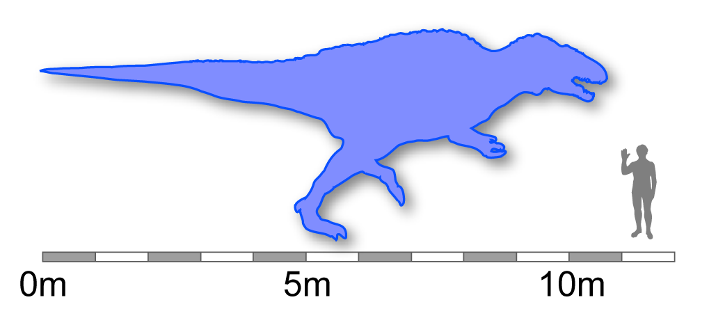 Description acrocanthosaurus size comparison