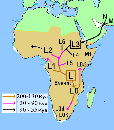 Map of early diversification of modern humans, with haplogroup L2 entering West Africa. African Mitochondrial descent.PNG