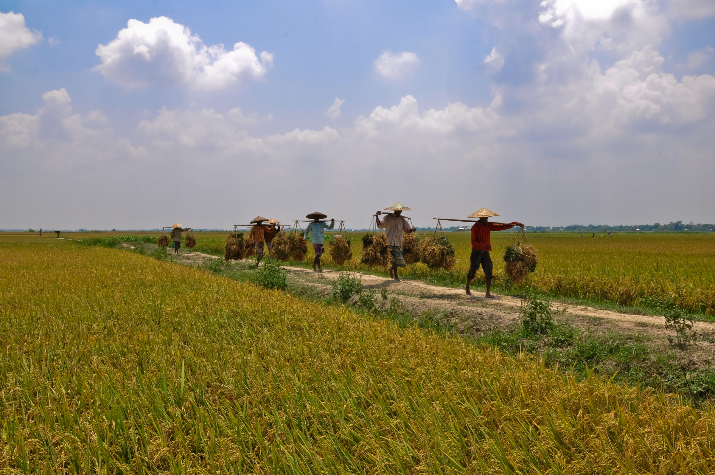 Agriculture in Bangladesh