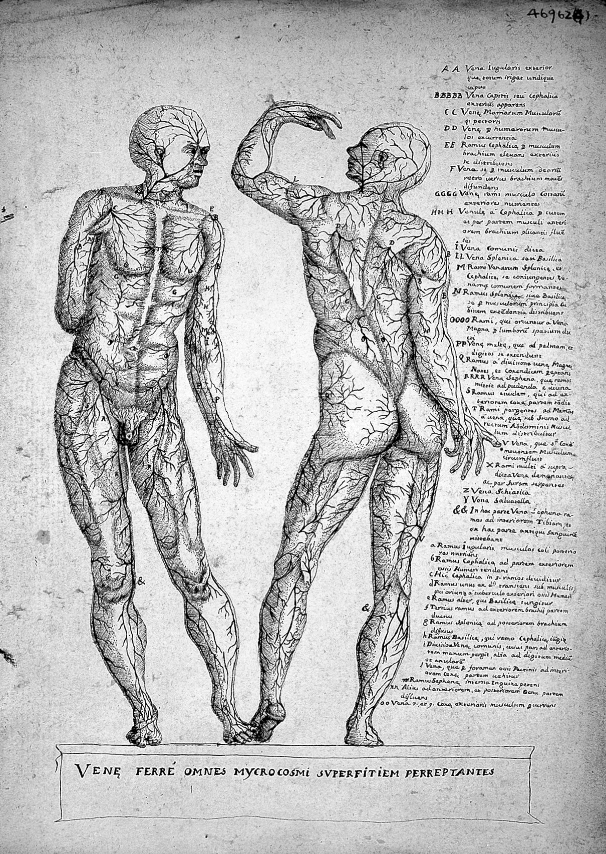 Fileanatomical Sketchesvalverde Blood Vessels Early 17th C