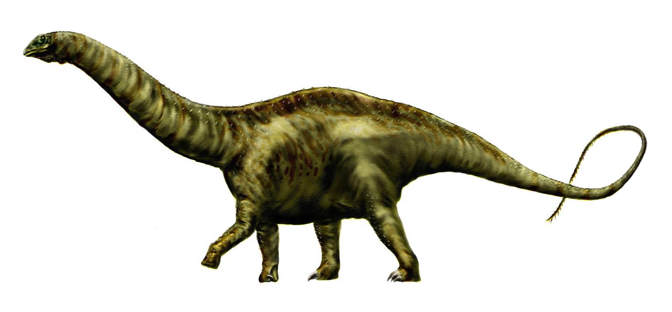 Christian Ryan Sauropods
