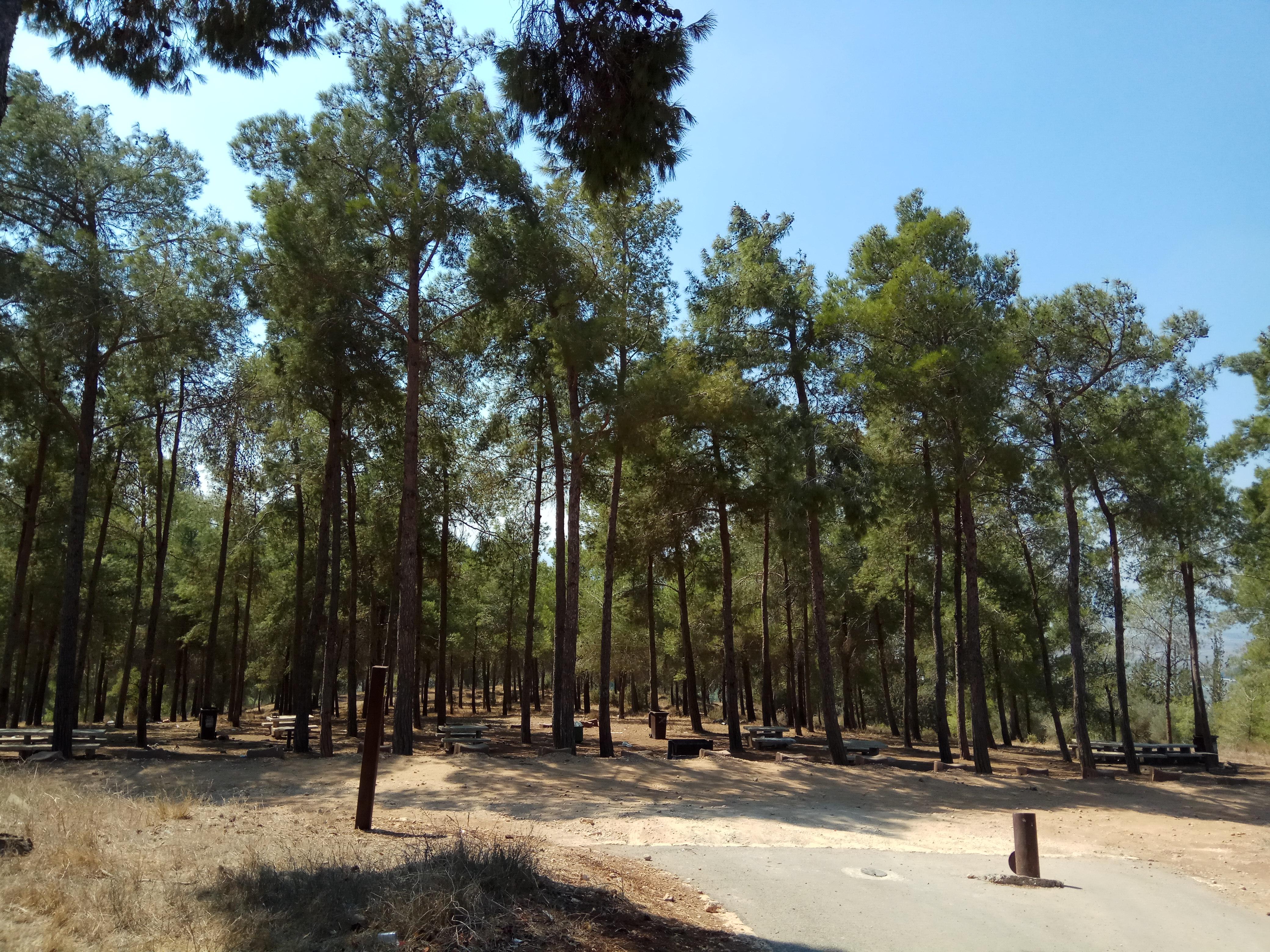 יער בלפור במגדל העמק