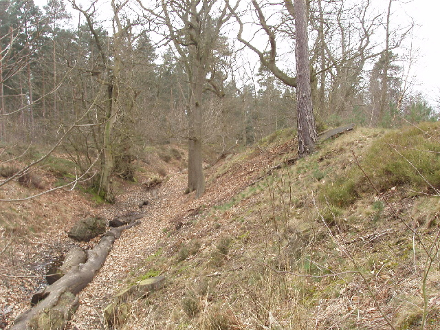 Bank and ditch of Caesar's Camp, Bracknell - geograph.org.uk - 729718