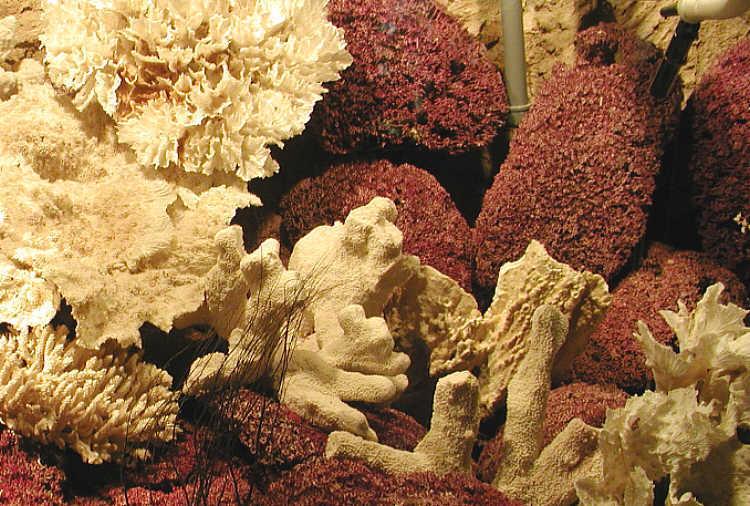 File:Dead Coral Bristol.jpg
